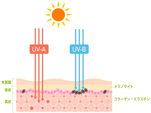 UV-A波とUV-B波