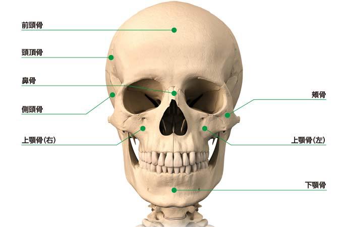 頭蓋骨の構成