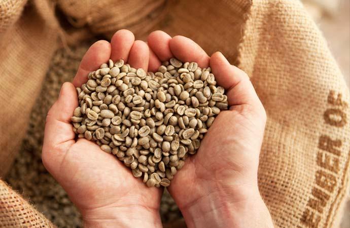 生コーヒー豆