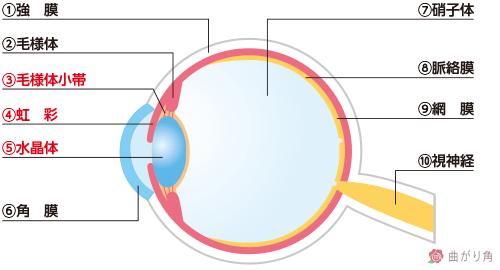 目の構造2