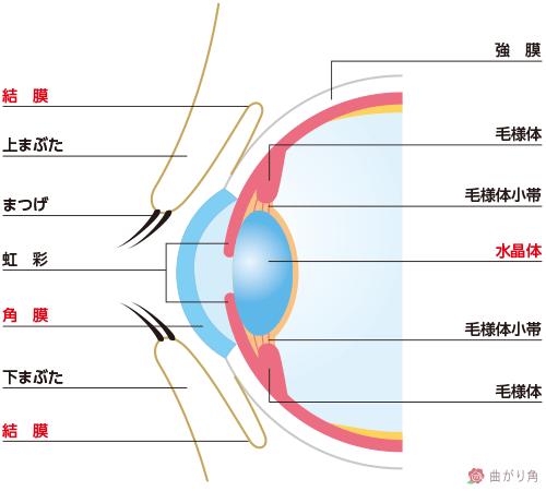 目の構造3
