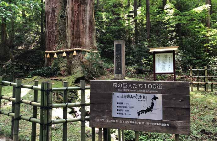 御岩神社:ご神木「三本杉」