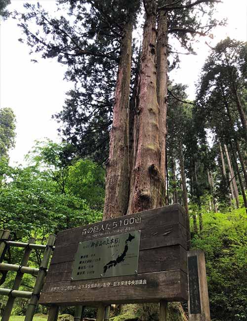 御岩神社:森の巨人たち百選