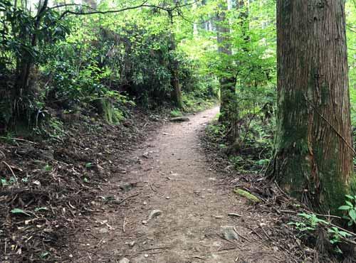 御岩山の山道1