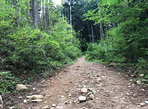 御岩山の山道2