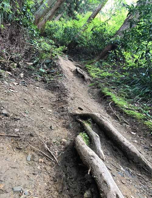 御岩山の山道4
